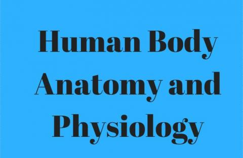 Overview Human Body Anatomy and Physiology