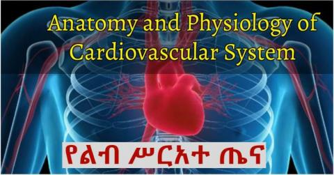 Cardiovascular System (Anatomy and Physiology )